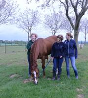 sauvetage chevaux